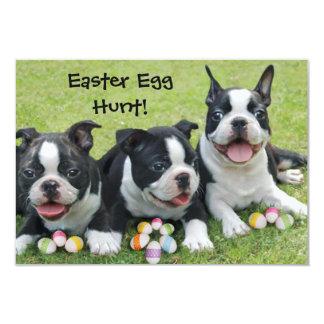 Easter Egg Hunt Boston Terrier Dogs  invitations