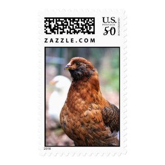 Easter Egger Chicken Postage