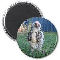 Easter Egger Rooster Magnet