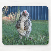 Easter Egger Rooster Mouse Pad