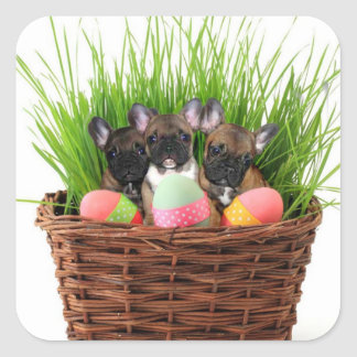 Easter french bulldog puppies square sticker