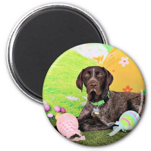 Easter - German Shorthair Pointer - Kaiser Magnet