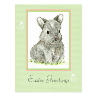 Easter Greetings Grey Baby Bunny Rabbit Postcard