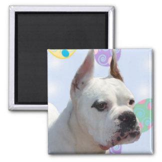 Easter greetings white boxer magnet