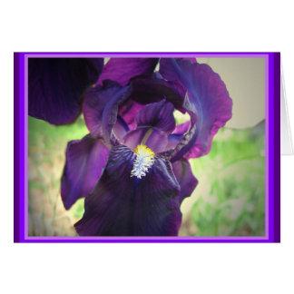 Easter Iris Card
