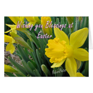 Easter Jonquil Card