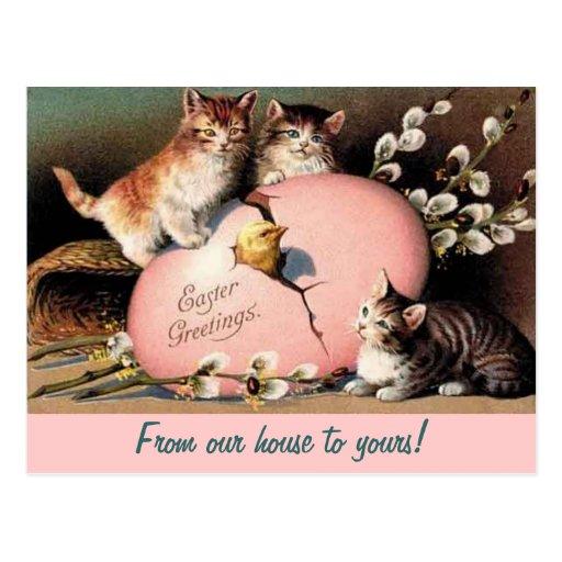 Easter Kittens Vintage Greeting Postcard