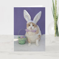 Easter Kitty Holiday Card