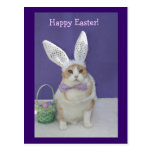 Easter Kitty Post Cards
