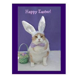 Easter Kitty Postcard