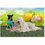 Easter - Komondor - Zoey - Basenji X - Jasper Photo Cut Outs