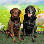 Easter - Labrador - Jack and Diane Photo Cut Out