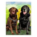 Easter - Labrador - Jack and Diane Postcard