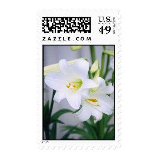 Easter lillie Postal stamp
