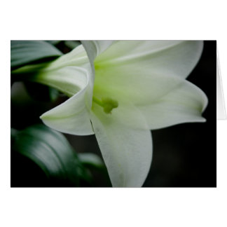 Easter Lily • Greeting Card