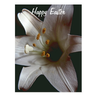 Easter Lily Happy Easter PostCard