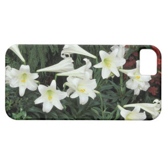 Easter Lily (Lilium regale) iPhone 5 Covers