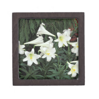Easter lilies gift boxes keepsake boxes zazzle easter lily lilium regale gift box negle Choice Image