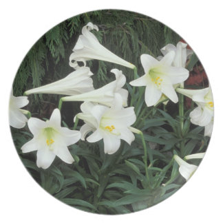 Easter Lily (Lilium regale) Plates