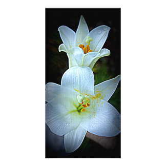 Easter Lily Personalized Photo Card