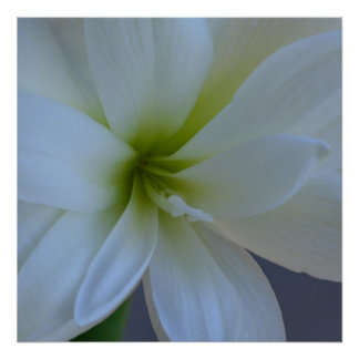 Easter Lily Photograph By Kim Rowlett Poster