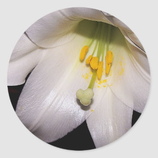 Easter Lily Sticker