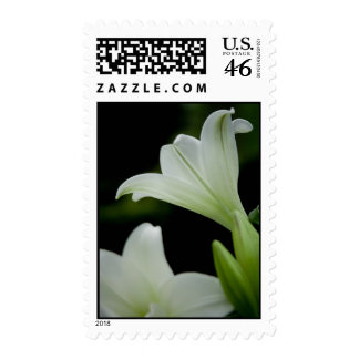 Easter Lily • Sympathy Stamp