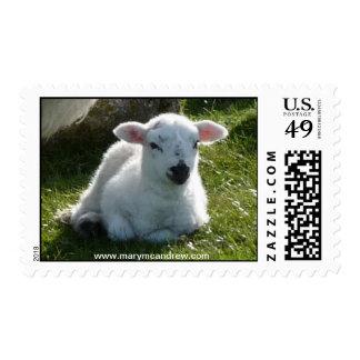 Easter Little Lamb Stamp