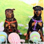 Easter - Min Pin - Zena and Gidget Photo Sculptures