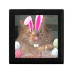 Easter Orange Tabby Kitty Cat Gift Boxes