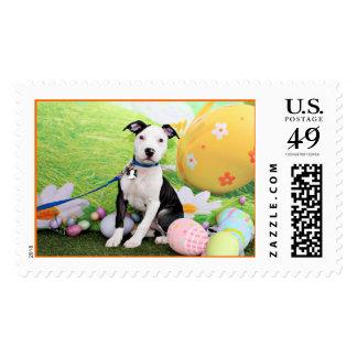 Easter - Pitbull  - Gunner Postage
