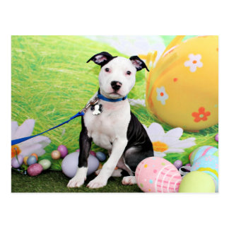Easter - Pitbull  - Gunner Postcard
