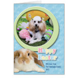 Easter - Poodle - Dolly Cards