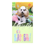 Easter - Poodle - Dolly Personalized Photo Card