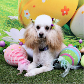 Easter - Poodle - Dolly Cut Out