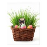 Easter pug puppy postcard