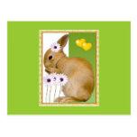 easter rabbit postcard