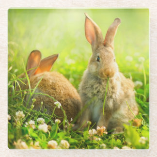 Easter Rabbits Glass Coaster