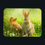 """Easter Rabbits Magnet<br><div class=""""desc"""">Rabbits. Beauty Art Design of Cute Little Easter Bunny in the Meadow. Spring Flowers and Green Grass. Sunbeams &#169; and &#174; Bigstock&#174; - All Rights Reserved.</div>"""