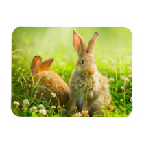 Easter Rabbits Magnet
