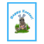 Easter Raccoon Bandit Postcards