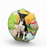 Easter - Rat Terrier - Georgia Award
