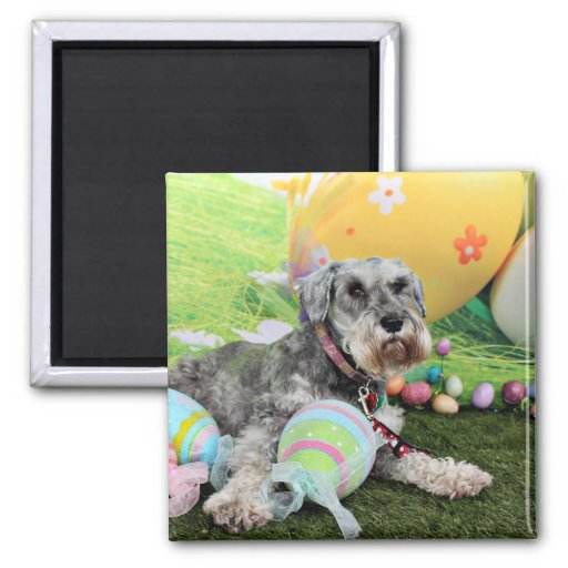 Easter - Schnauzer - Fergie 2 Inch Square Magnet