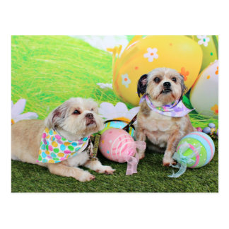 Easter - Shih Tzu - Clementine and Winston Postcard