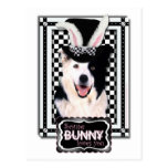 Easter - Some Bunny Loves You - Border Collie Postcard