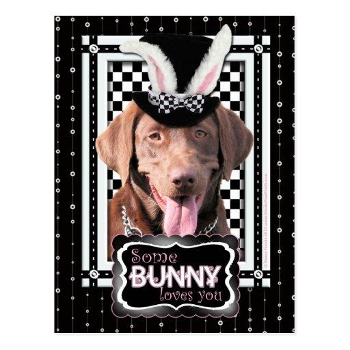 Easter - Some Bunny Loves You - Labrador Chocolate Postcard