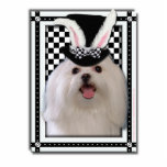 Easter - Some Bunny Loves You - Maltese Cut Outs