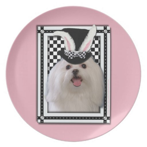 Easter - Some Bunny Loves You - Maltese Party Plates