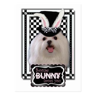 Easter - Some Bunny Loves You - Maltese Postcard