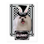 Easter - Some Bunny Loves You - Maltese Postcard